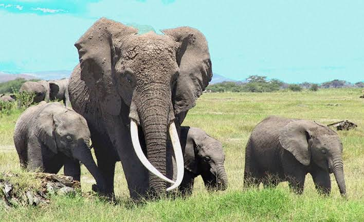 Penalty for Killing, Lions, Elephants and Vultures in Nigeria  – #ObscureLegalFacts