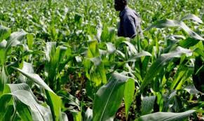 An Appraisal of the Regulatory Framework for Investment in the Nigerian Agricultural Sector – Uche Matthew and Demilade Odutola